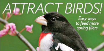 Image - birding blog graphic