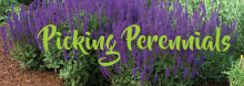 Today's gardeners can choose from an ever-widening array of plants in beautiful new colors and forms. Bill Malouche, owner and manager of the Kansas City office of National Nursery Products, discusses which varieties are particularly suitable for landscaping in the Lower Midwest.